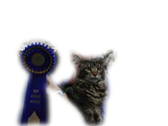 PADOVA esposizione 05-01-2003. Squabby's Far west BEST In SHOW assoluto cuccioli pelo semilungo e BEST N VARIETA'!l