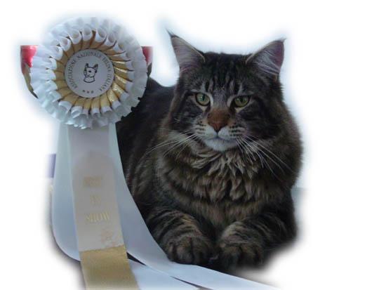 All'esposizione di Suzzara- MANTOVA- del 23-03-2003 Far west ha vinto il BEST IN SHOW PELI SEMILUNGHI ed e' arrivato II al BEST OF BEST