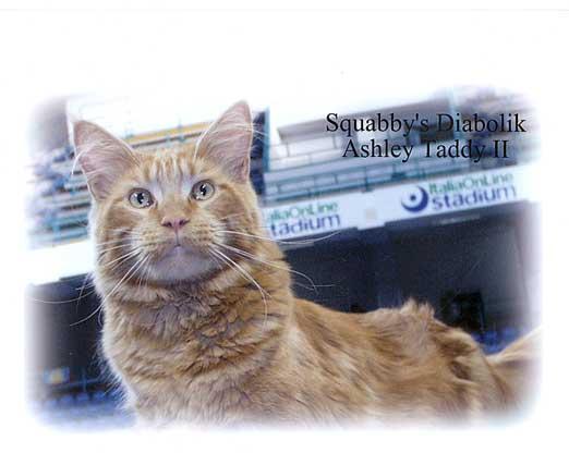 Squabby's Diabolik Ashley Taddy II: padre di Squabby's Far west (foto Marina Marconi)