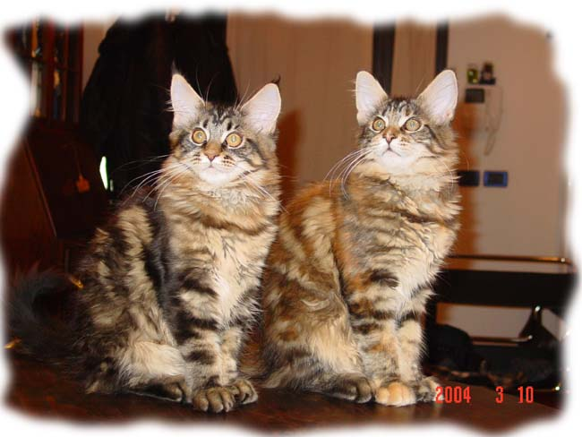 Escape's Magic Miracle (sulla destra)a 4 mesi a casa nostra insieme a Norma ( a sinistra)