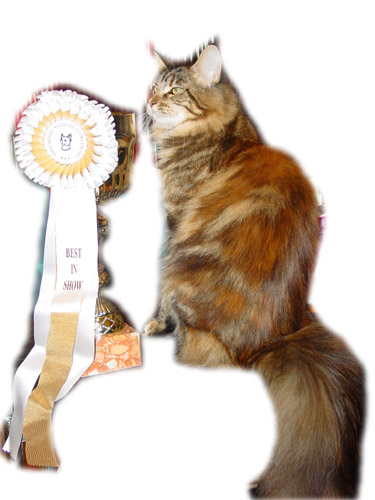 Gic Escape's Magic Miracle con una delle sue molte coppe vinte al Best in Show!!!